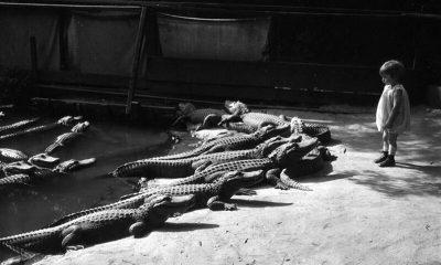 malenka-divchynka-i-krokodyly
